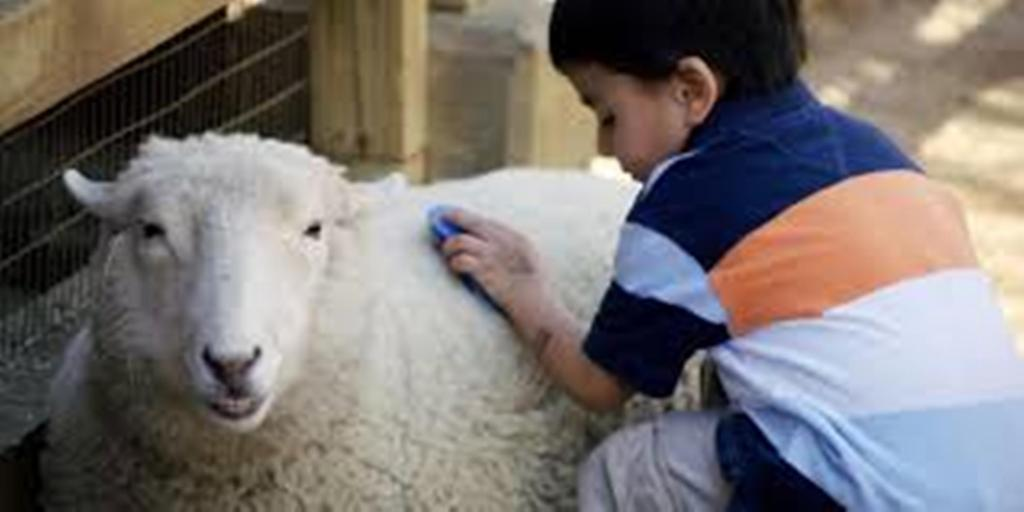 لماذا نذبح خروف العيد كيف نجيب أطفالنا مجلة سيدتي