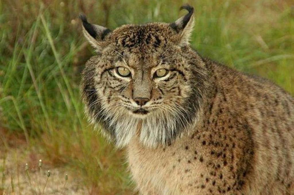 الحيوانات مهددة بالانقراض بسبب استخدامها كسلع
