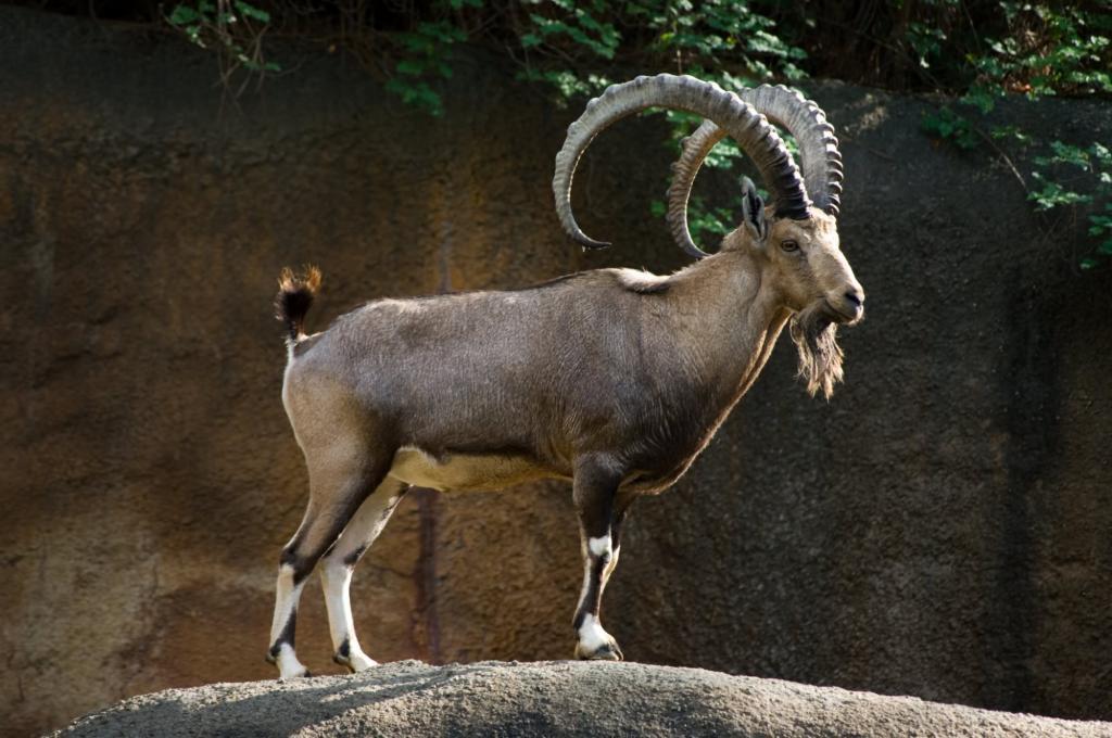 خمس مملكة الحيوانات مهددة بالانقراض