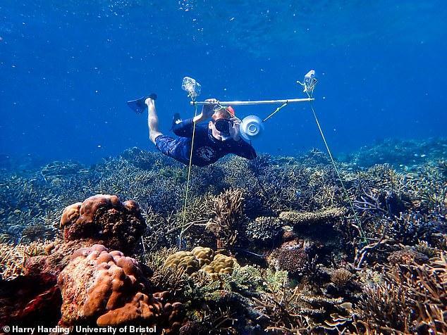 مكبرات الصوت تجدد الشعاب المرجانية