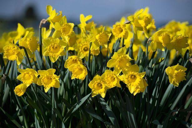 موع الاعتدال الربيعي