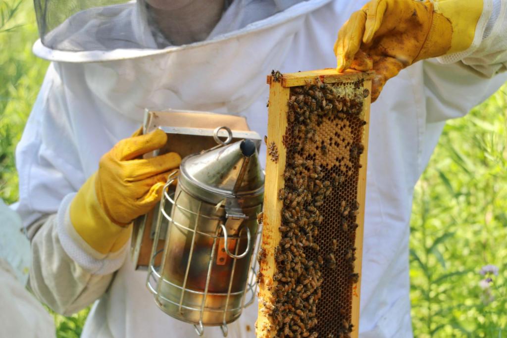 النحلات العاملات هن من يقررن إن كن يرغبن في ملكة جديدة