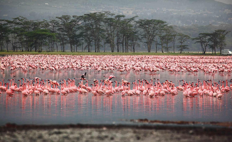 حديقة بحيرة ناكورو الوطنية