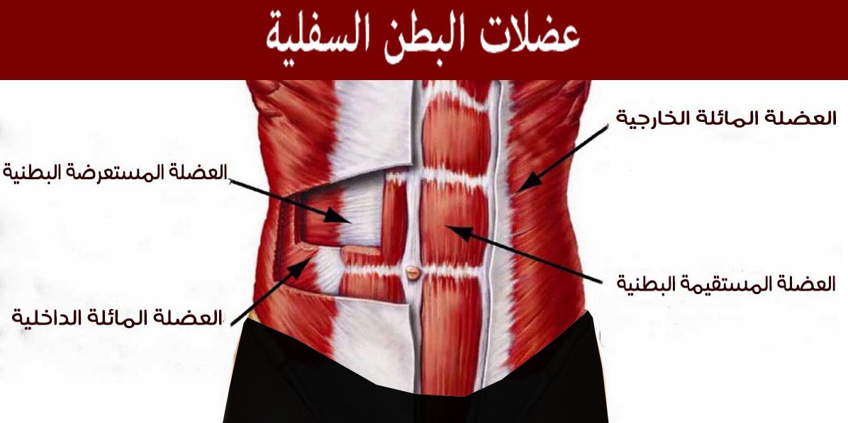 يصنع الاسوأ رد قماش ما اسم عضلات البطن Pleasantgroveumc Net