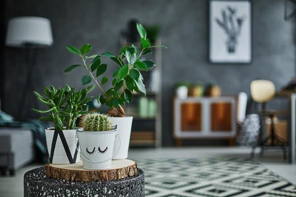 فوائد النباتات المنزلية
