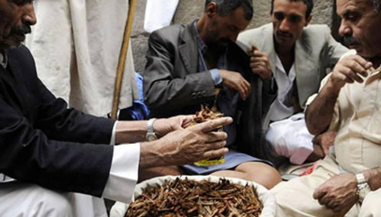 يعتمد اليمنيون على الجراد لكسب الرزق