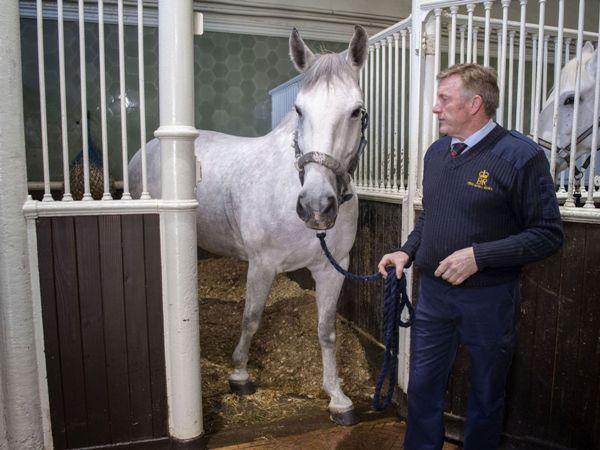 اختيار الحصان الهادئ والموثوق لجر عربة العروسين