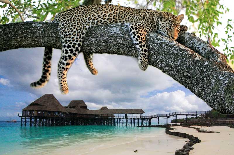 جزيرة زنجيبار