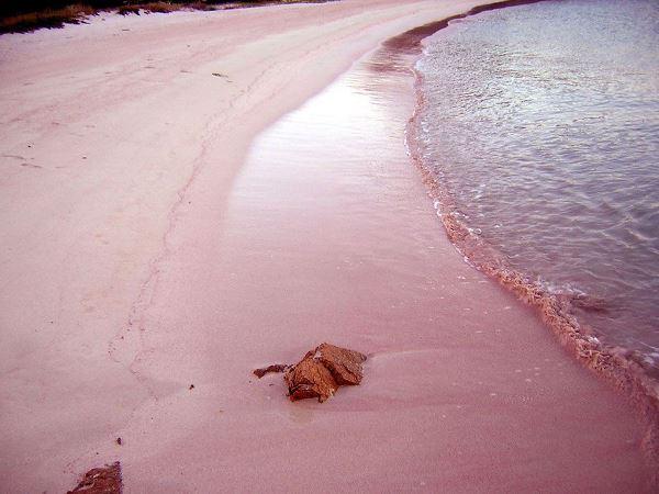 الشواطئ السياحية لهواة الغوص