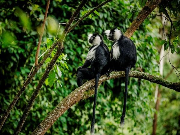 إقامة سياحية فريدة في جنوب غرب رواندا
