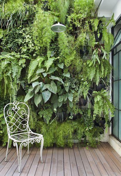 النباتات ذات الحجم الكبير في الديكور المنزلي المعاصر