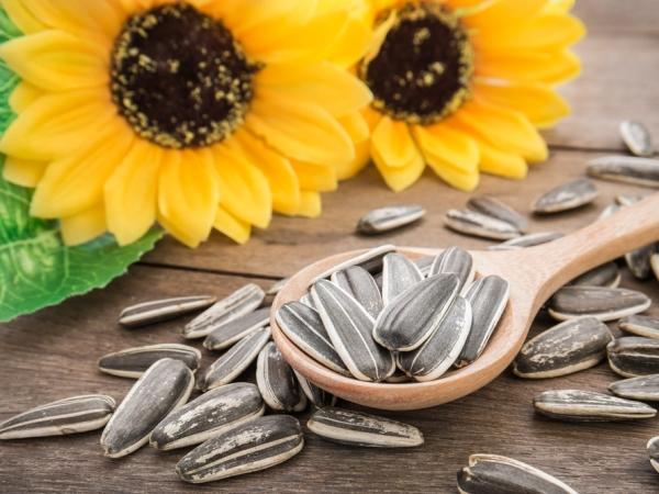 فوائد بذور دوار الشمس في التغذية