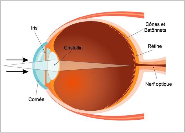 القرنية هي الطبقة الأولى من العين