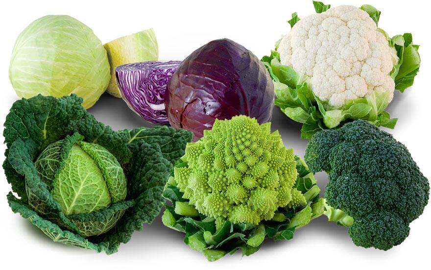 تناول الأطعمة المعروفة بمقاومتها للسرطان مهمٌ للوقاية