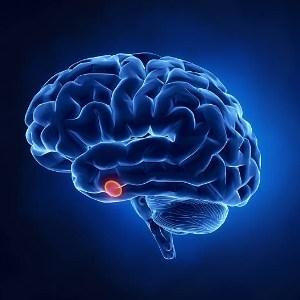 الإصابة بالأورام في الغدة النخامية يؤدي إلى خمولها