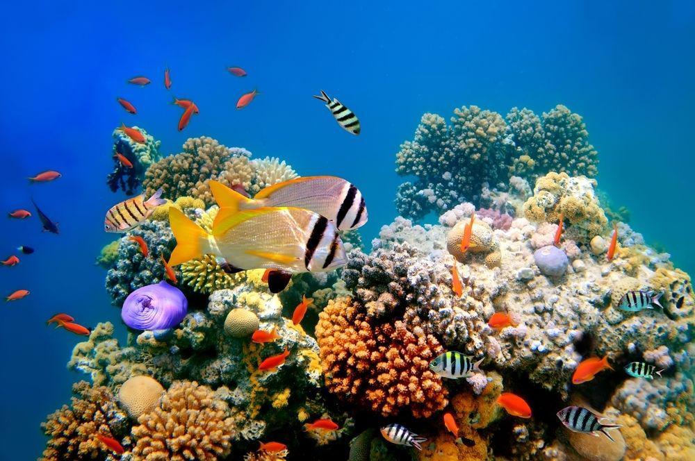 الشعب المرجانية قد تثير الذعر لدى بعض مرضى فوبيا الثقوب