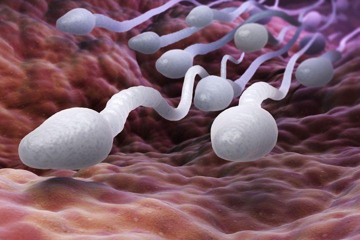 فيروس كورونا في السائل المنوي للمصابين الذكور!