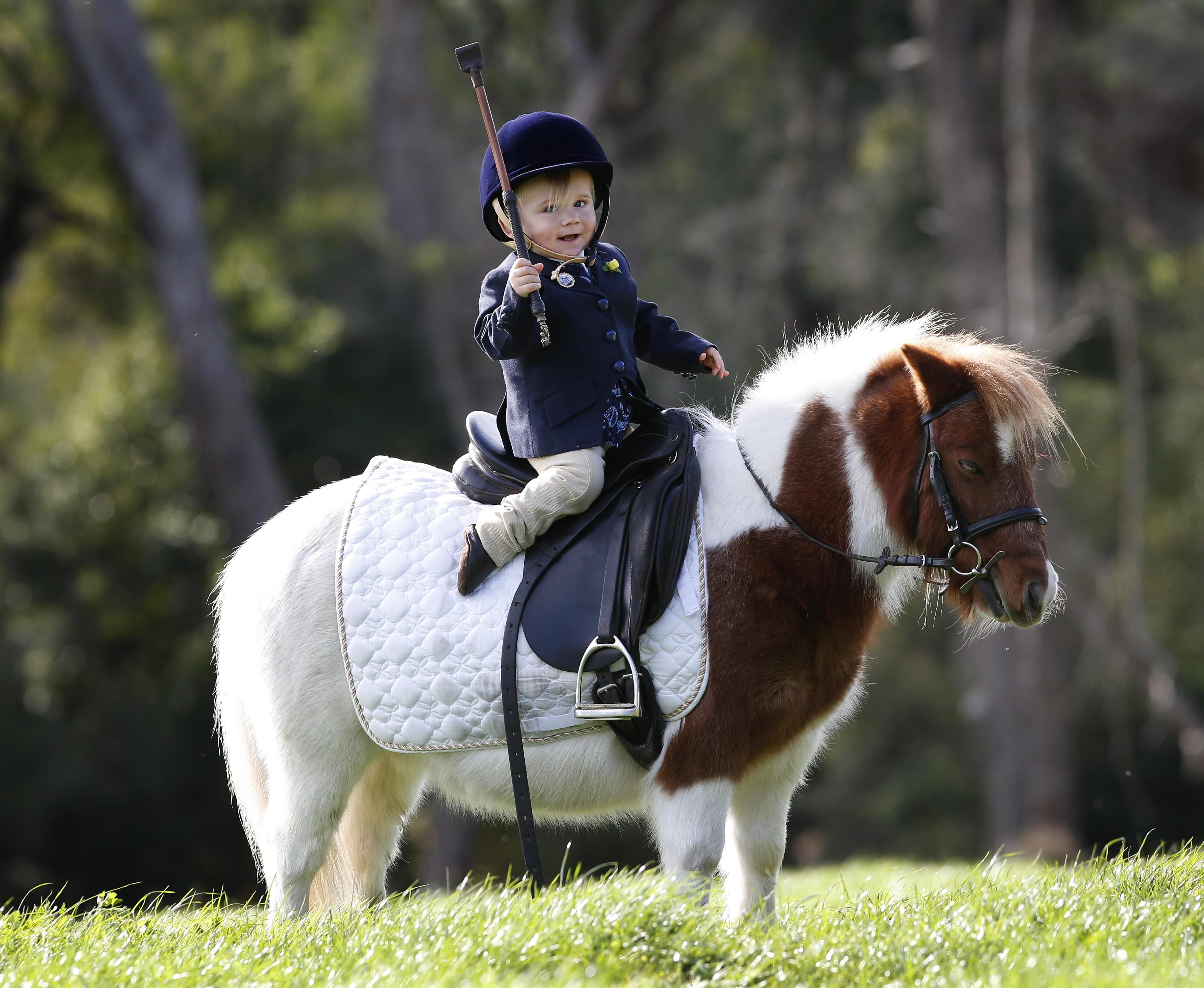 حصان صغير للفارس الصغير مجلة سيدتي