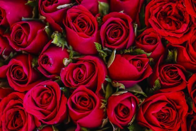 الوردة الدمشقية