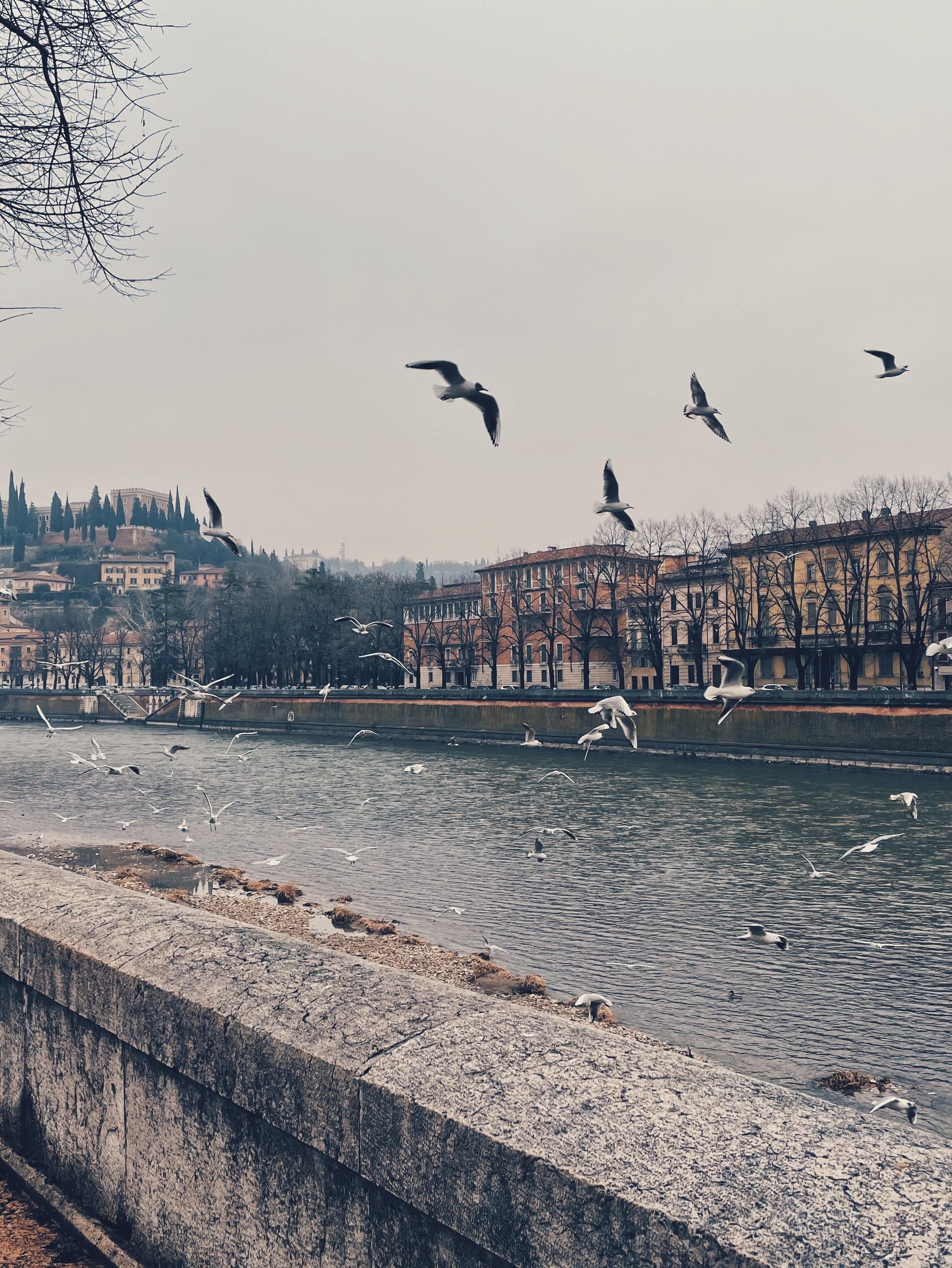 التنزه في فيرونا، إيطاليا