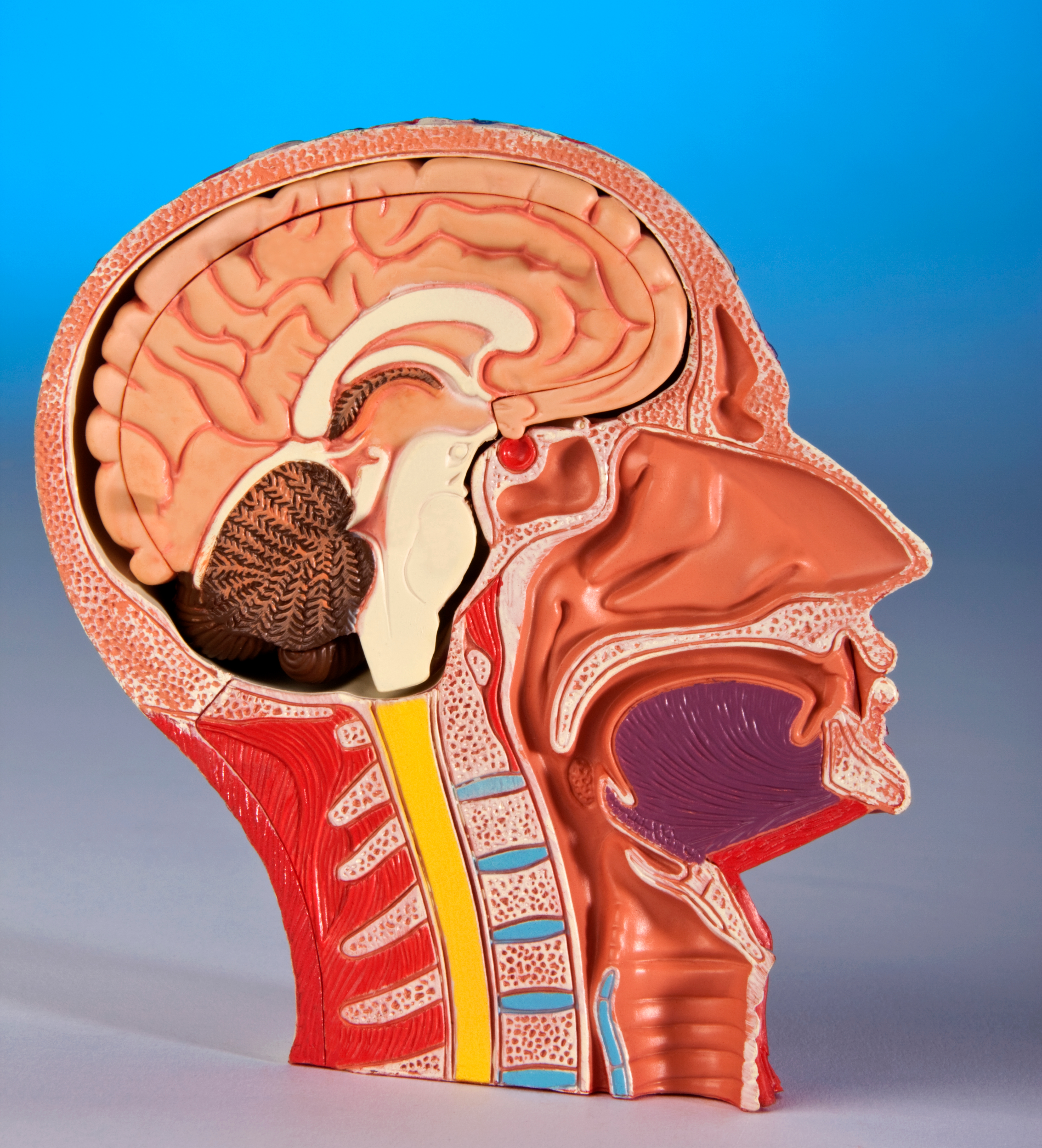 الفيسيولوجيا - علم وظائف الأعضاء