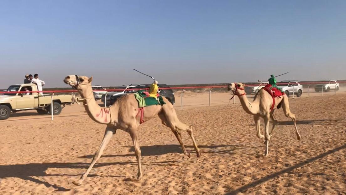 سباق الهجانة - من فيس بوك محافظة مطروح اليوم