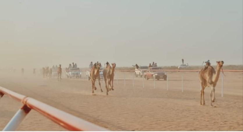 سباق الهجانة - من فيس بوك محافظة مطروح اليوم2