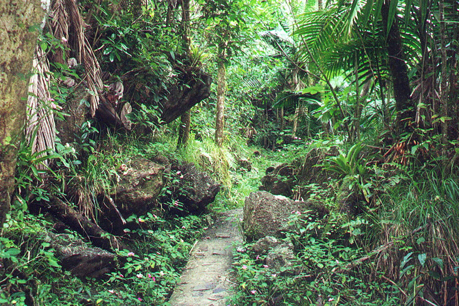 استكشاف جزيرة Yunque