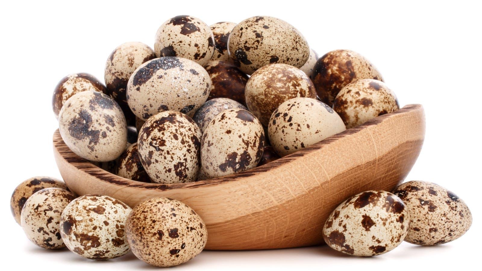 فوائد بيض السمان في تقوية مناعة الجسم