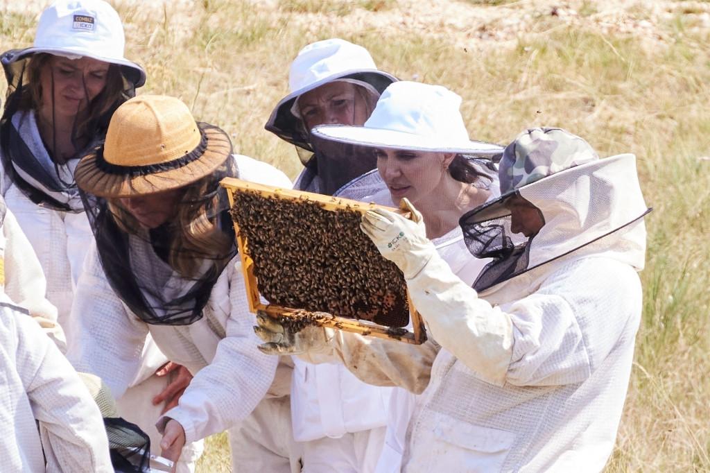 أنجلينا جولي ترعى النحل- الصورة من موقع Page 6