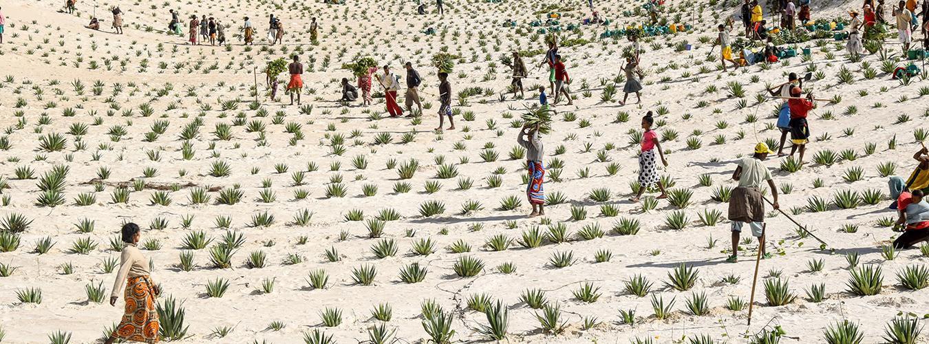 برنامج الأمم المتحدة الإنمائي في مدغشقر- الصورة من موقع الأمم المتحدة