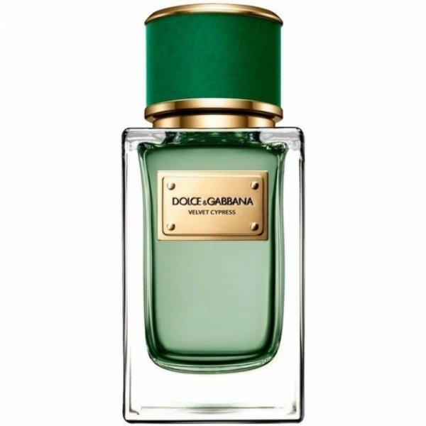 Dolce&Gabbana Velet Cypress