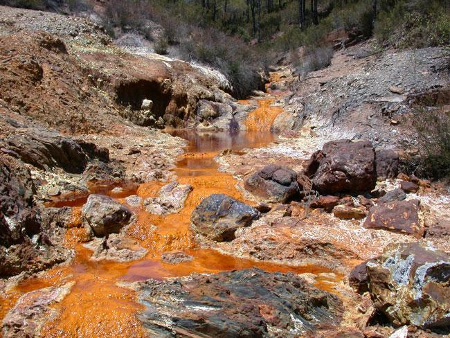 تعدين الذهب يضر بالغابات