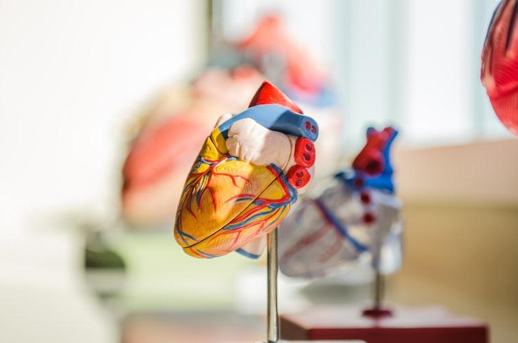 النيترات الطبيعية تحمي القلب والأوعية الدموية