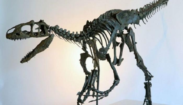 ديناصور منقار البط