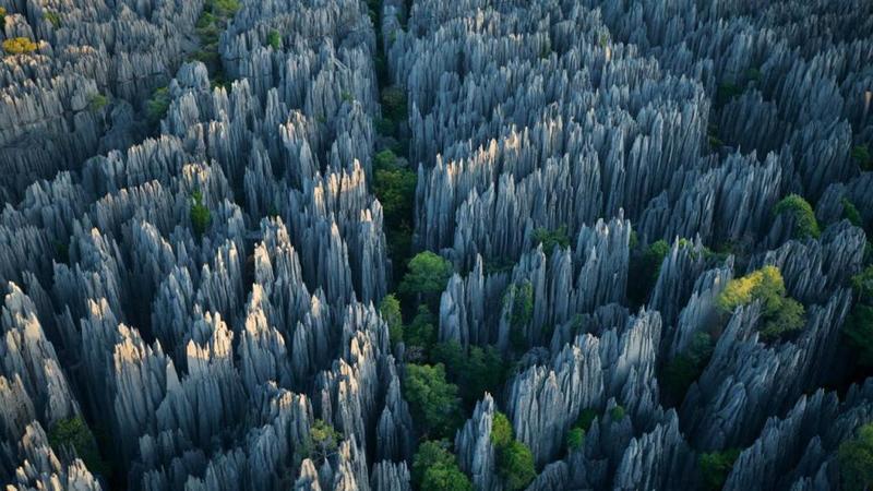 تشكل الغابات الحجرية