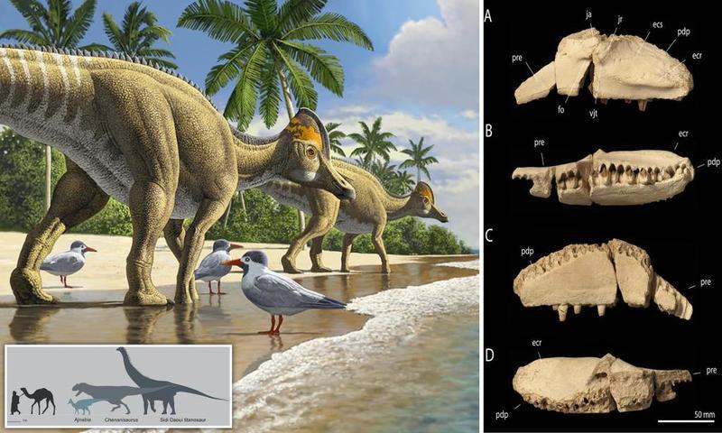 وجد العلماء بقايا الديناصور بالقرب من الدار البيضاء