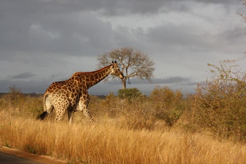 شهر العسل في أفريقيا