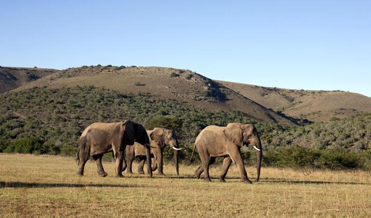 مغامرات لا تنتهي في جنوب أفريقيا