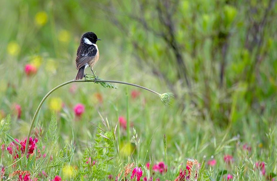 nature_9.jpg